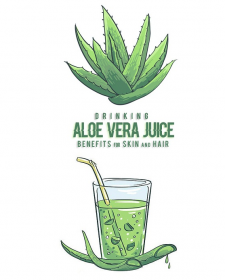 The benefits of drinking fresh aloe vera juice and pulp